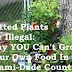 Potted Plants are Illegal: Why YOU Can't Grow Your Own Food In Miami-Dade County