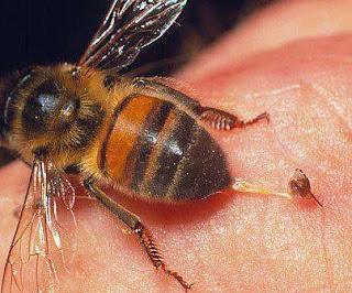الأمراض التي يعالجها سم النحل