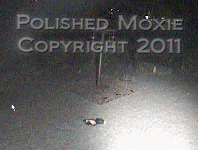 Picture of a skunk walking across the yard at night