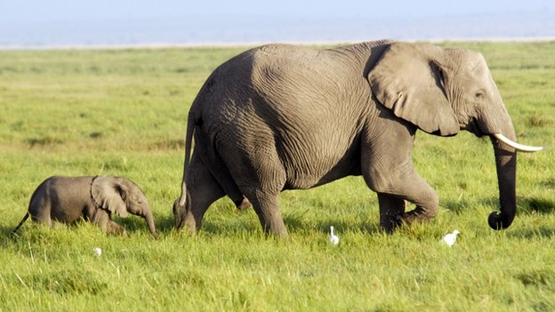 Kuttees.in: Interesting facts about Elephants for Children ...