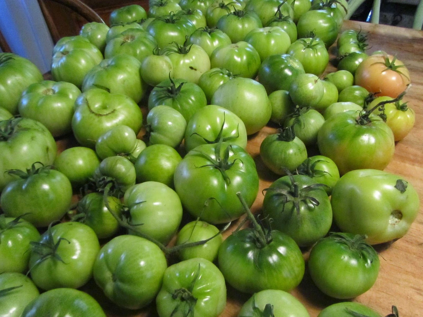 Green Rutgers VF Heirloom Tomatoes