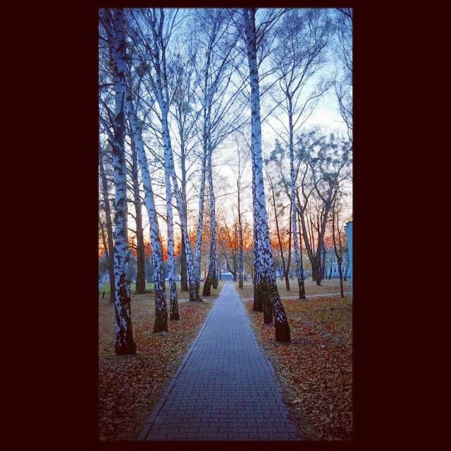 Viale alberato a Varsavia d'autunno