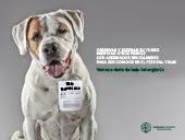 Campaña contra el festival de Yulin