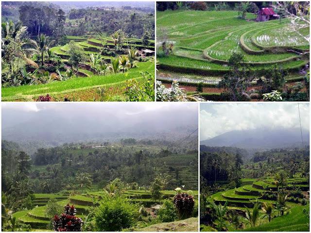 Jati Luwih Terraces