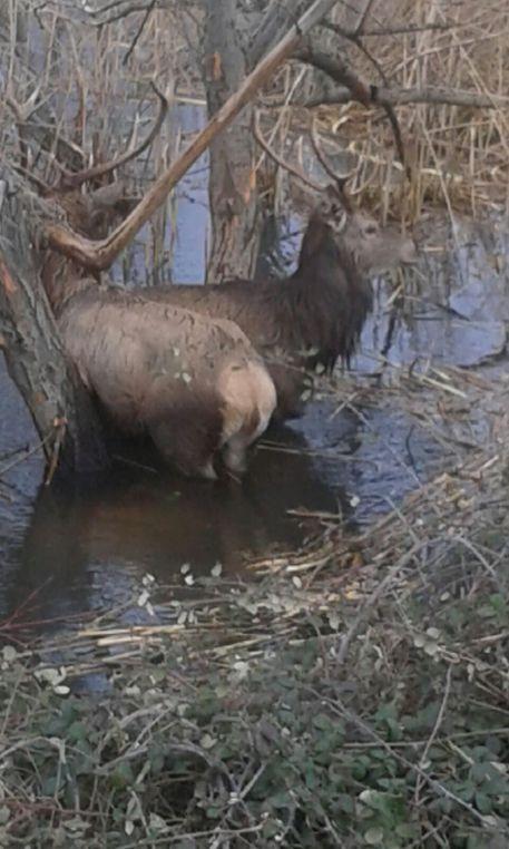 Associazione italiana difesa animali ed ambiente cervi for Animali laghetto