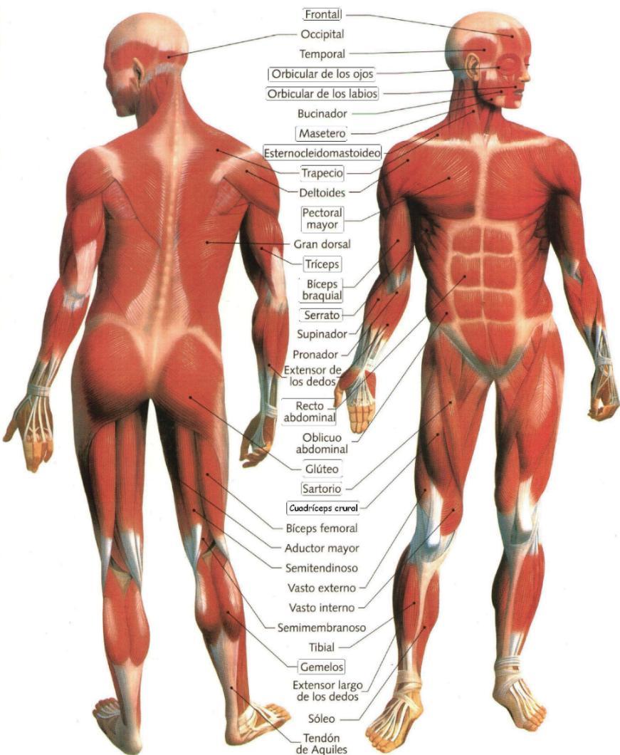dibujo sobre el cuerpo humano:
