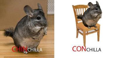 CONchilla