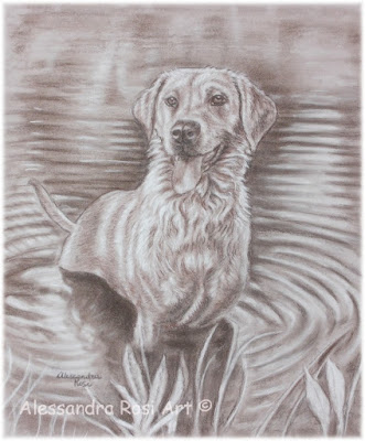 Labrador pet portrait drawing, custom pet portrait