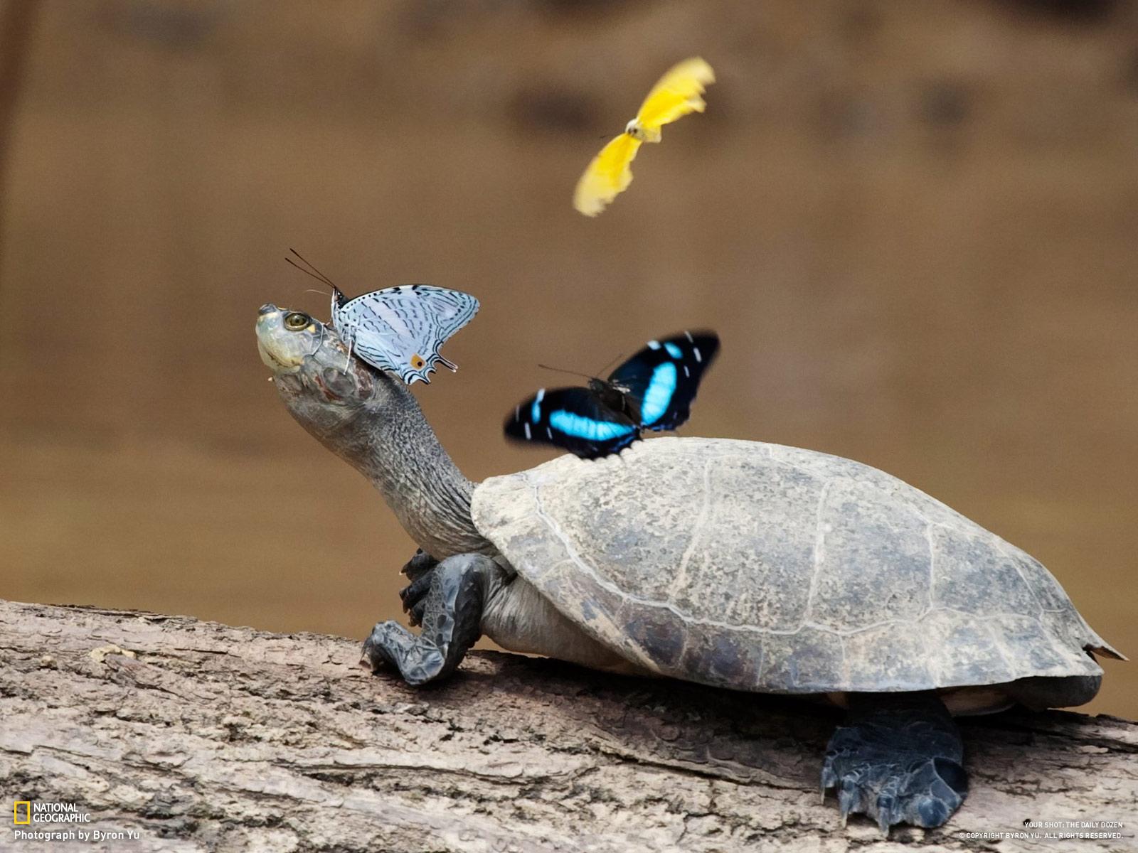 http://3.bp.blogspot.com/-9EfLpmVT304/TmppbIMURoI/AAAAAAAAA3M/OS4b_QfbGPM/s1600/turtles_butterfiles_animals_nature_www.Vvallpaper.net.jpg