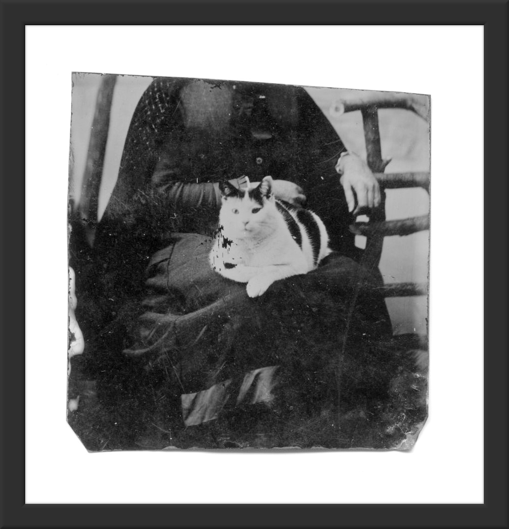 Tin-Type Photo of Mystery Woman and her Fluffy Cat