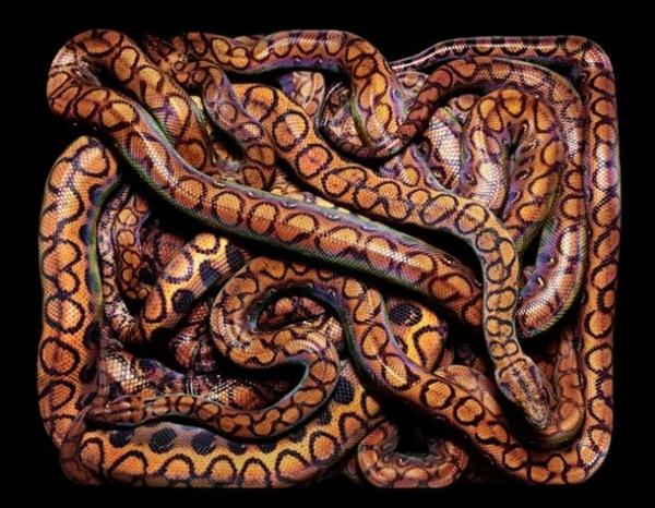 http://3.bp.blogspot.com/-9EjCrSkriBE/TpbPcO5FW9I/AAAAAAAADAc/ZVjXGrNhbQE/s1600/256707%252Cxcitefun-fascinating-snakes-06.jpg
