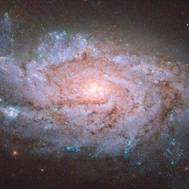 Spiral Galaxy NGC 1084