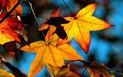 Autumn Season HD Wallpaper (autumn leaves light widescreen wallpaper )