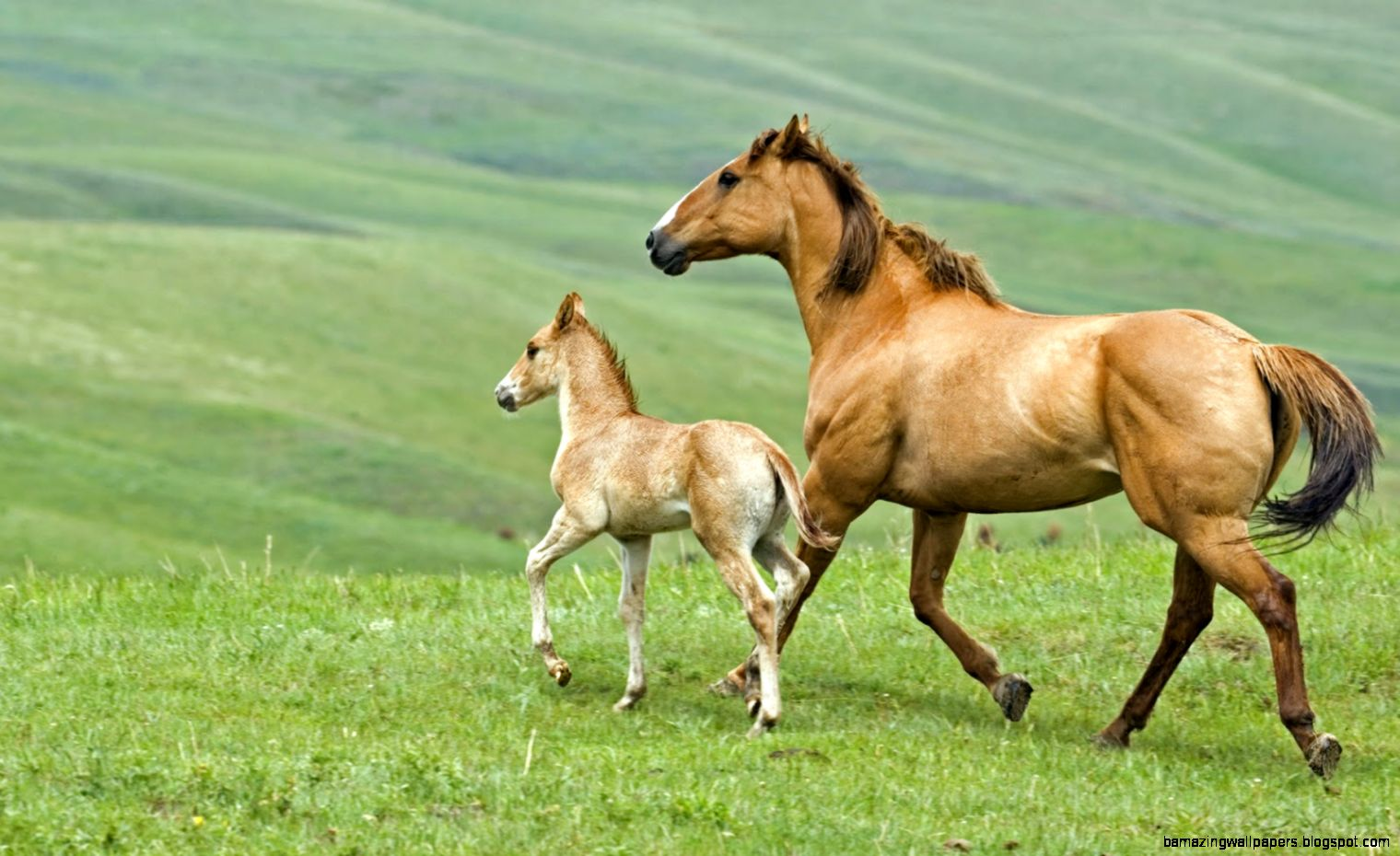 Baby Horses   Top Images