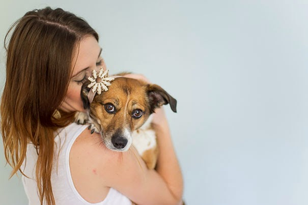 Photo Shoot Featuring A Dog Instead Of A Baby-2