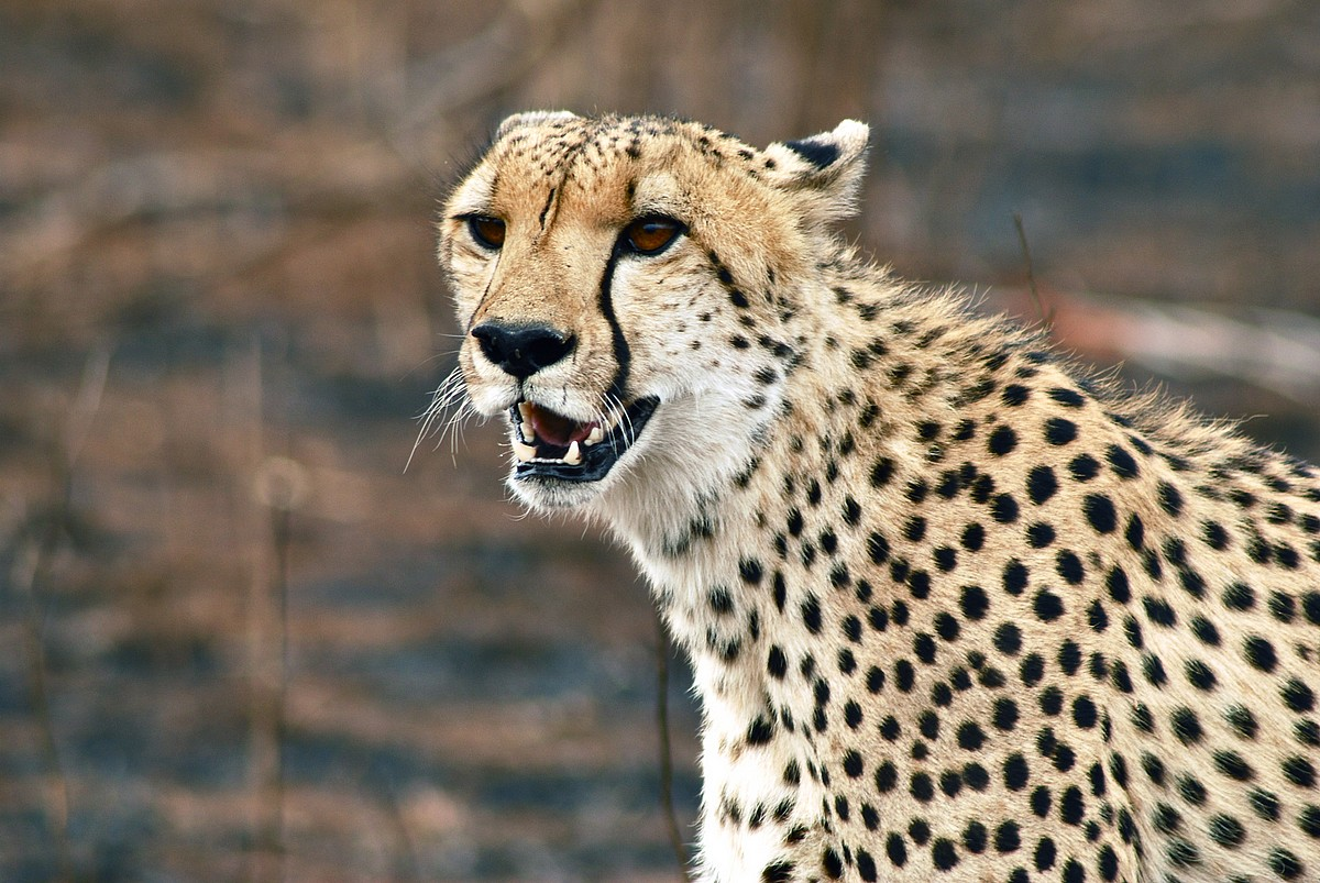 Types Of Cheetahs on From Tadpole To Frog