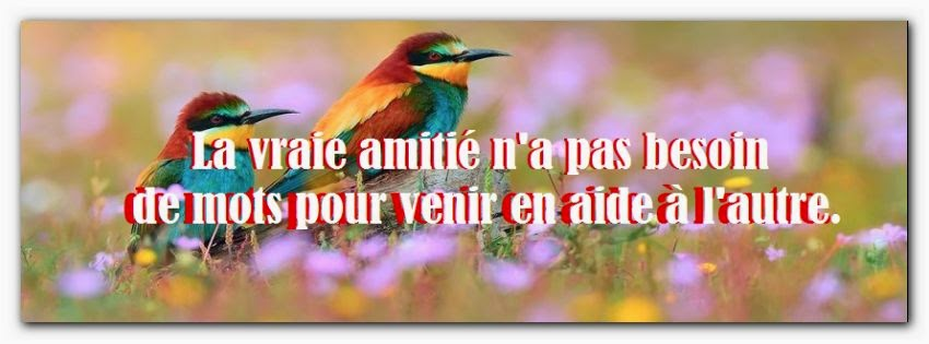 Citation d'amitié sur facebook