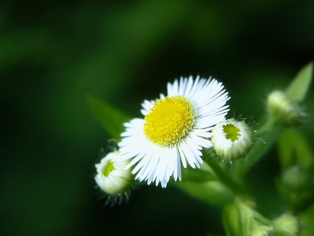 http://3.bp.blogspot.com/-9GAhqtNfcQM/Tn1FJ4LJ9iI/AAAAAAAAGSg/RhY8pQdgCXY/s1600/Nature%2Bflowers%2Bwallpapers%2Bfor%2Bdesktop%2B2.jpg