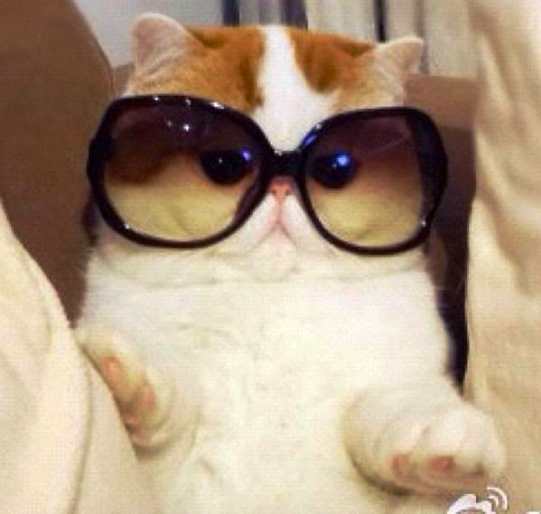 World Is Beautiful Meet The Cutest Cat Ever Snoopy