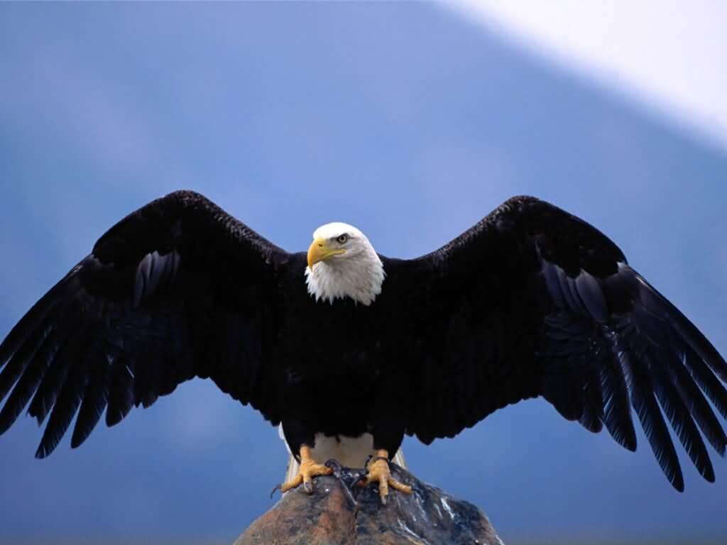 Fun Animals Wiki, Videos, Pictures, Stories Eagle Hawk