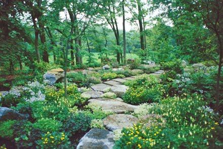 All The Dirt On Gardening Sedum Ternatum Dry Shade Zones 3 To 9