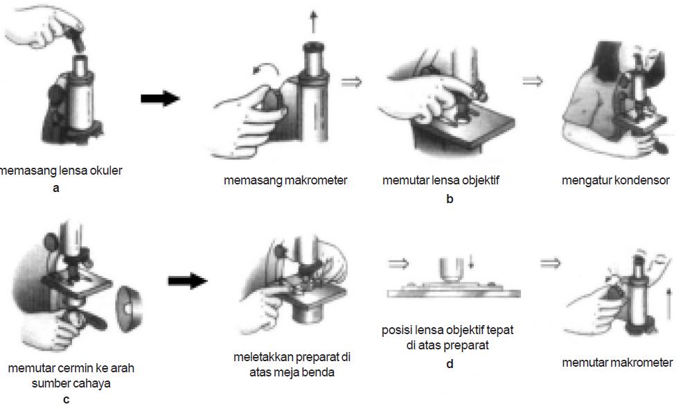 Bagian-Bagian Mikroskop & Fungsi, Cara Menggunakan ...