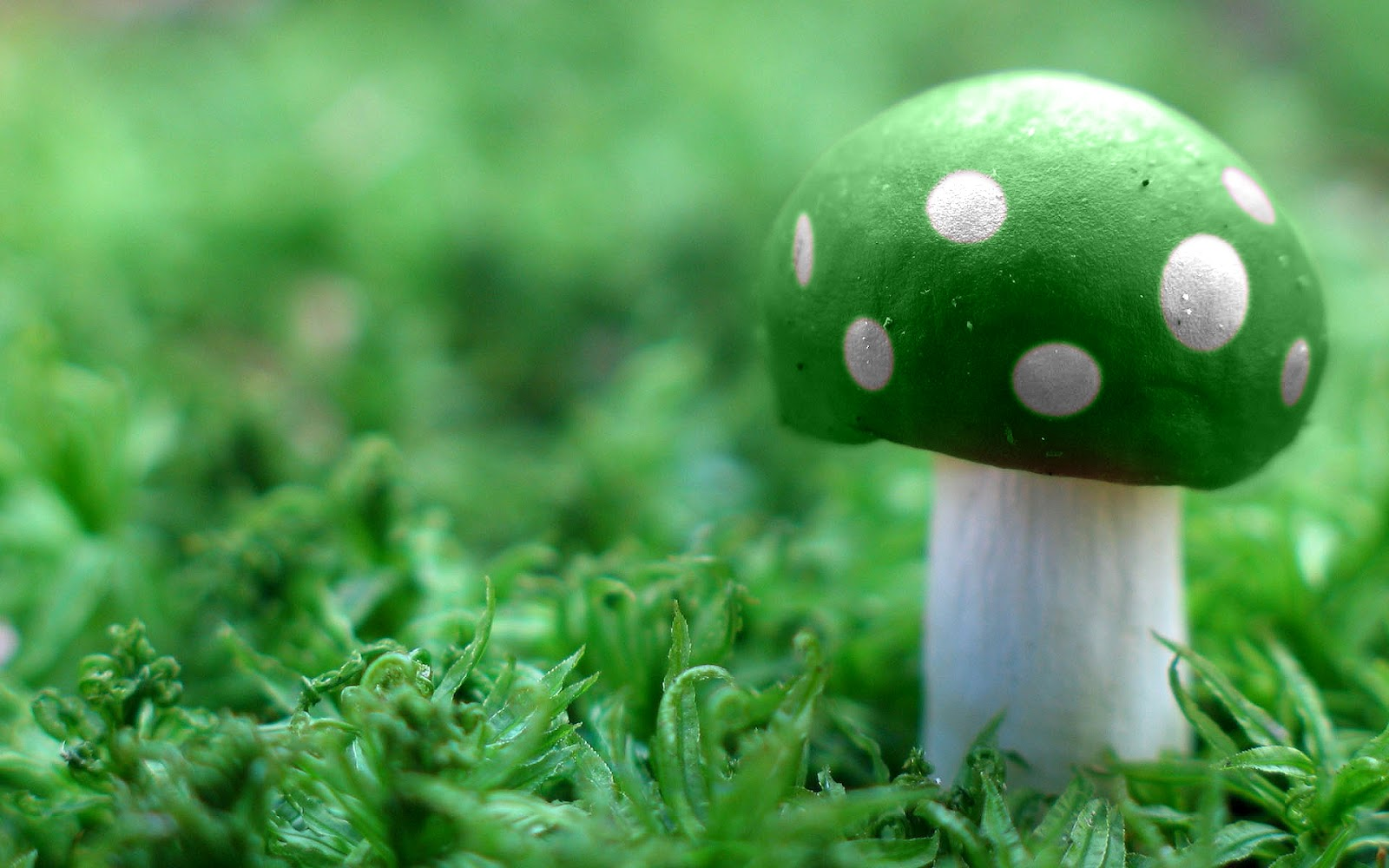 WnP Wallpapers Amp Pictures Green Mushroom Wallpaper