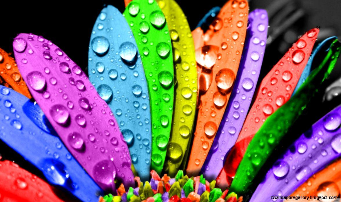 Colorful Flower HD desktop wallpaper  Widescreen  High