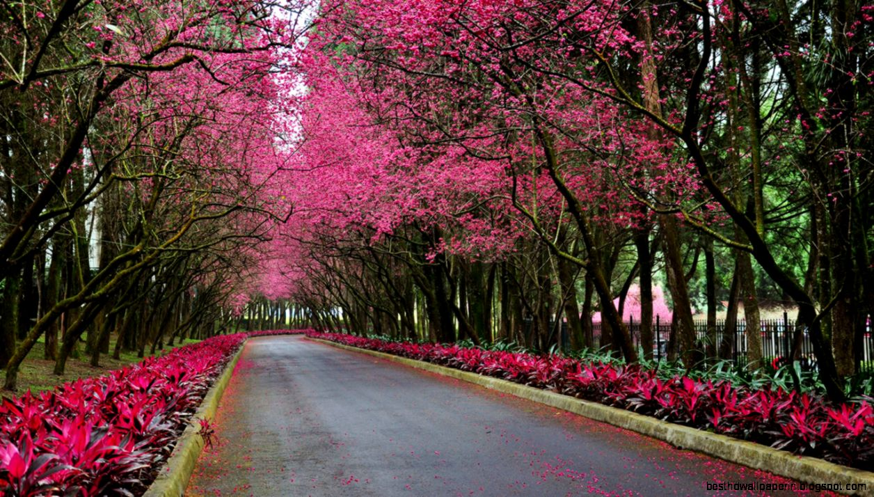 spring scenic wallpaper best hd wallpapers