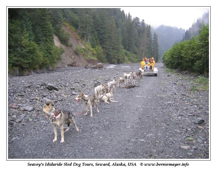 Ididaride Hundeschlitten Tour