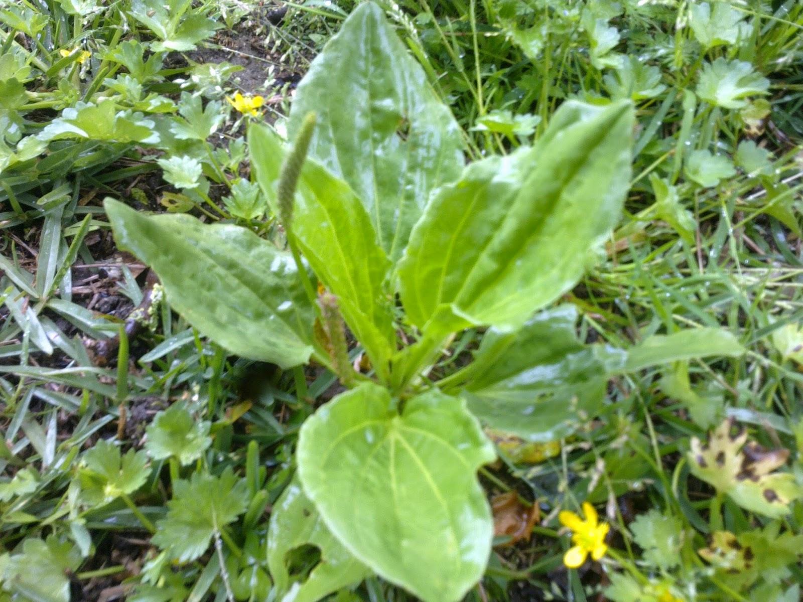 image gallery plantas abortivas