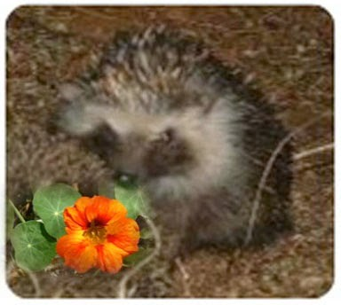 Hedgie's Nature Journal