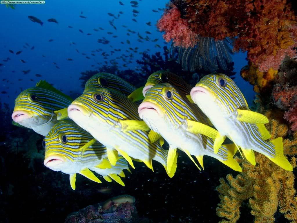 Seputar Dunia Perikanan Foto Dan Gambar Ikan Cantik Buat Wallpaper