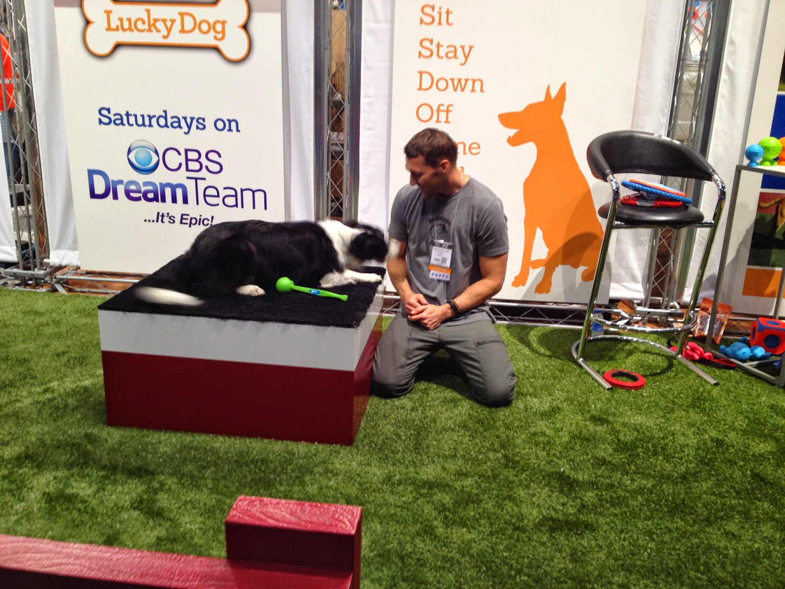 Life With Beagle: Global Pet Expo: Day 1 in photos