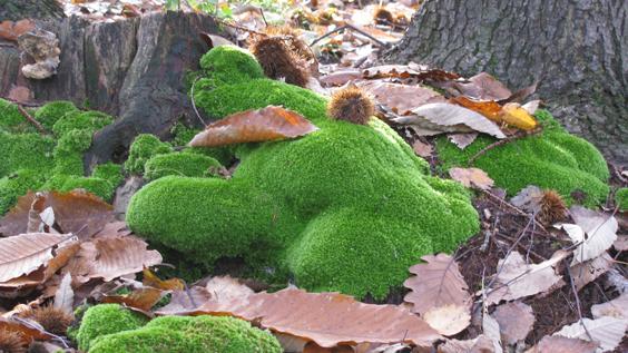 Il giardino delle naiadi il sottobosco in dicembre for Piante da sottobosco