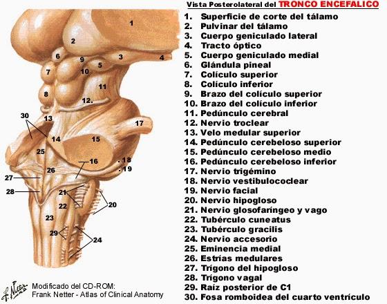 Morfofisiologia I: abril 2014