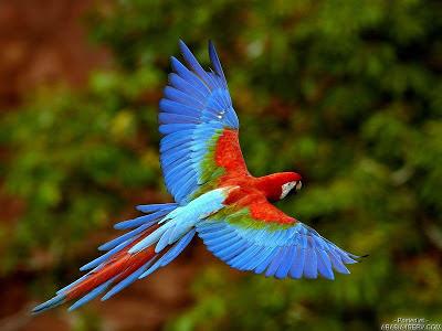 %D8%B7%D9%8A%D9%88%D8%B14 صور رمانسية طبيعية لأجمل الطيور 2014