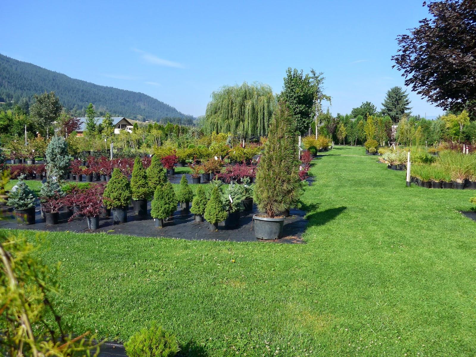 Coldstream Willows Nursery
