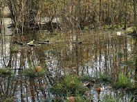 Vegetació a la bassa de l'esquerra de l'Estany de Can Torrent