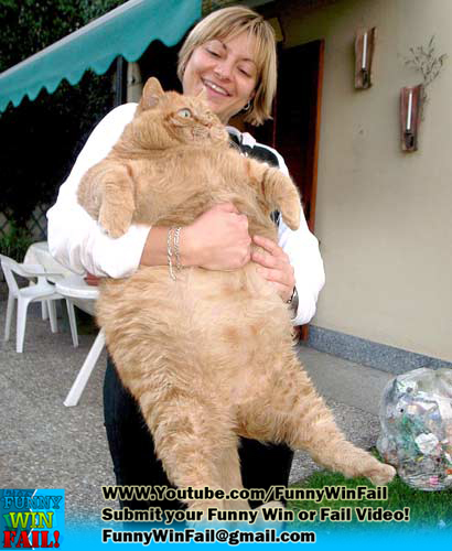 Garfield In real life Fat Cat