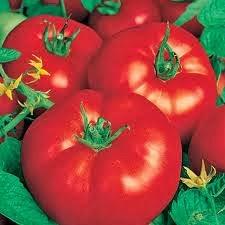 pourrissement des tomates