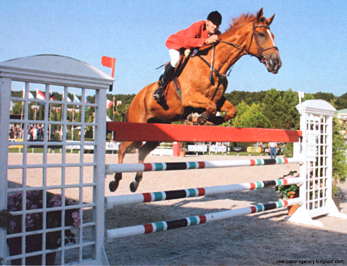 Horse Jumping Wallpaper Desktop  Amazing Wallpapers