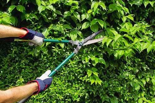 Recortar setos biznagarden empresa de jardiner a en m laga - Empresas de jardineria en malaga ...