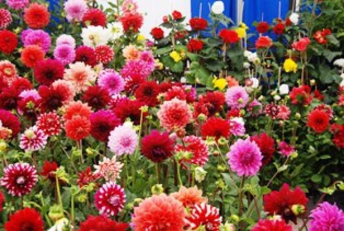 Pin plantas de ornato on pinterest for 10 plantas de ornato
