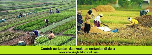 kegiatan pertanian.... pengertian pertanian... pengrtian agraris...