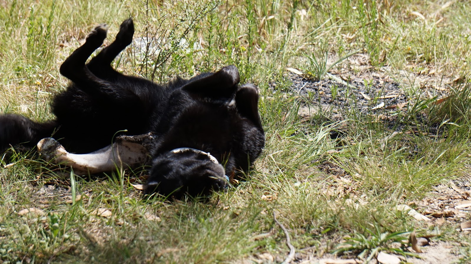 Fine For Having Dog In National Park Nsw