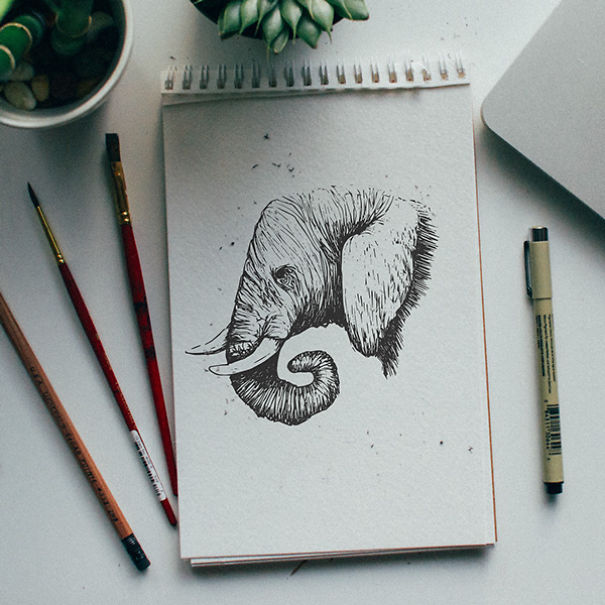 kyson dana alphabet animal illustrations