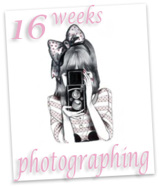16 weeks photographing