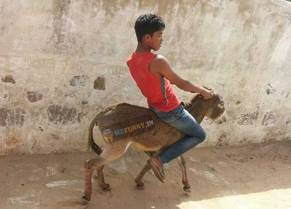 indian-boy-funny-donkey-driving