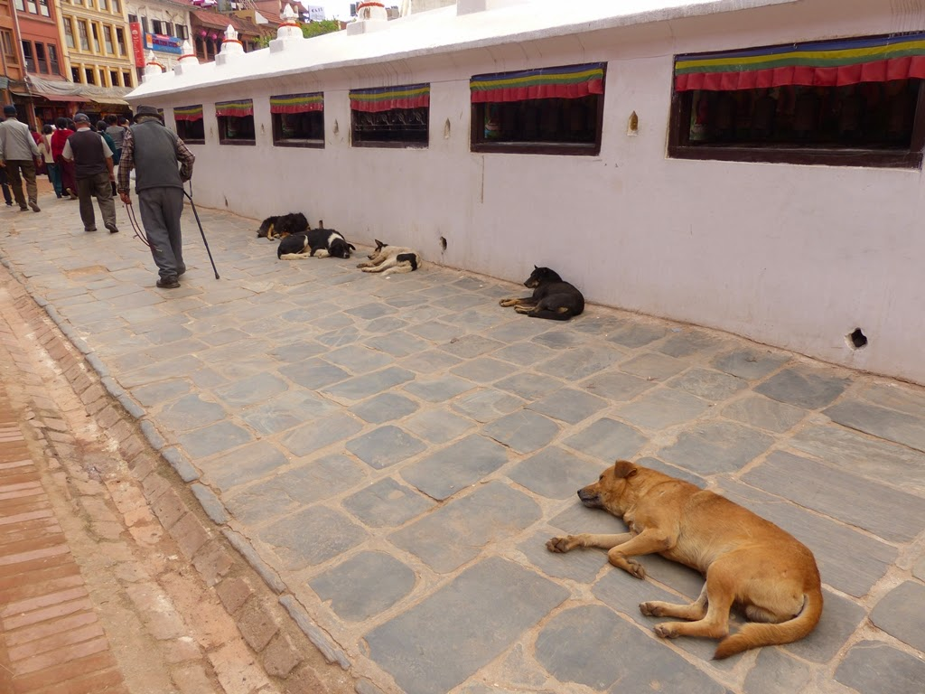 Dogs sleeping on the premises of the Boudhanath stupa, Kathmandu, Nepal